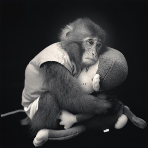 Big with Monkey Doll, Suo Sarumawashi (2008) Hiroshi Watanabe